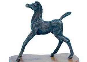 Foal Startled