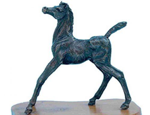 Foal – Startled